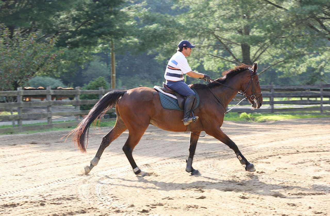Hanoverian Horses For Sale In Nc